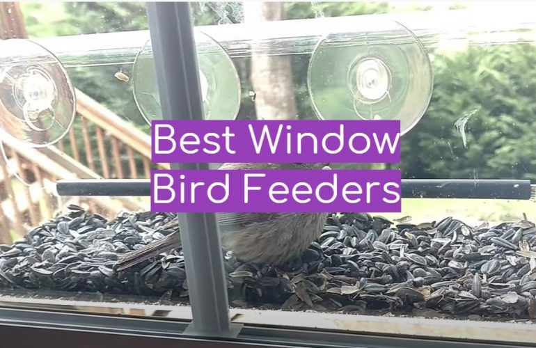 5 Best Window Bird Feeders