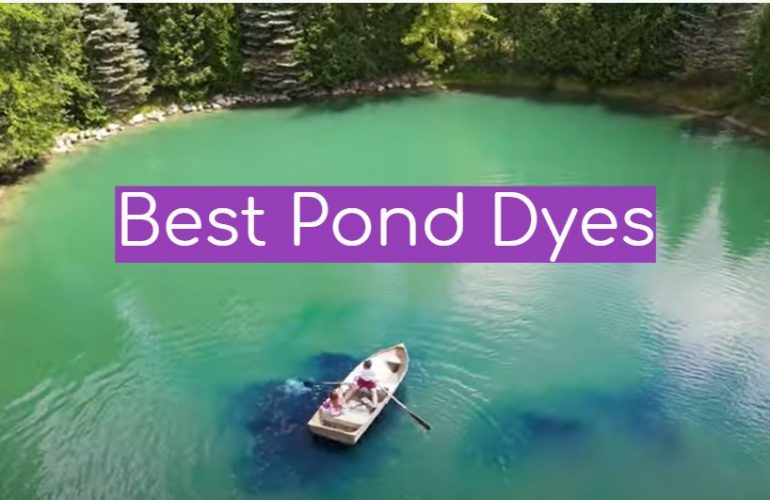 5 Best Pond Dyes