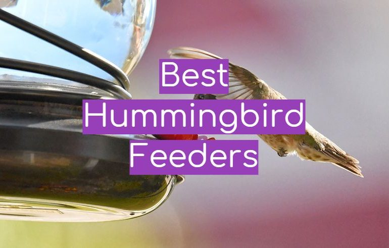 5 Best Hummingbird Feeders